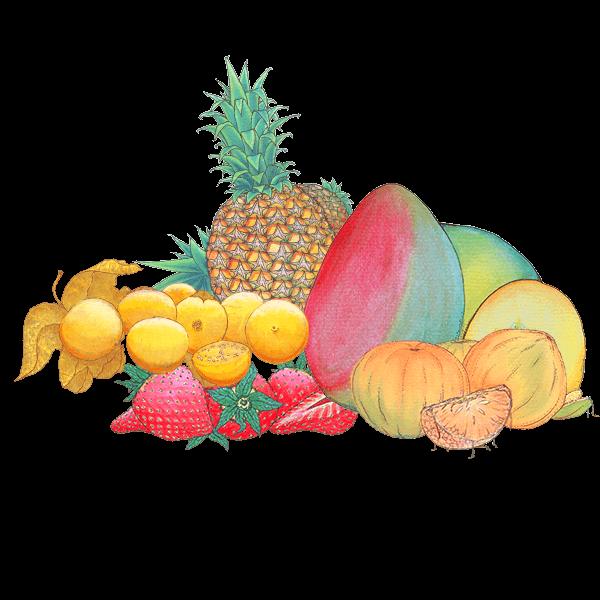 Fruta_deshidratada_Alibu
